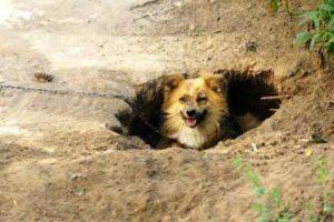 Доставать из ямы