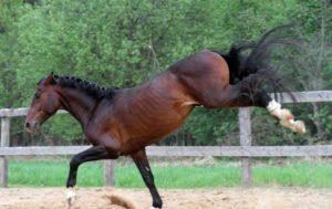 Лошадь лягнула