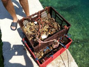 Ловить моллюсков в океане