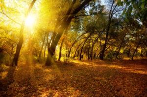 Осеннее солнышко