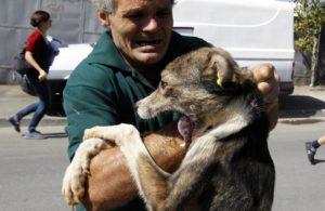 Схватка с собаками