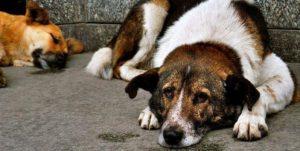 Помогать бездомному псу