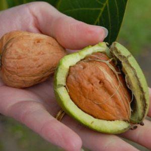 Срывать плоды