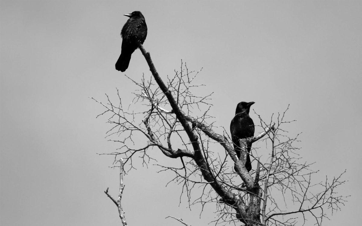 К чему снится стая черных воронов