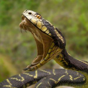Нападение змеи