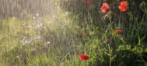 Утренний дождь