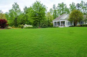 Лужайка возле дома