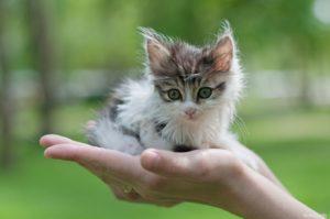 Оберегать котенка